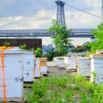 Apiário em horta urbana. Img: brooklyngrangefarm.com