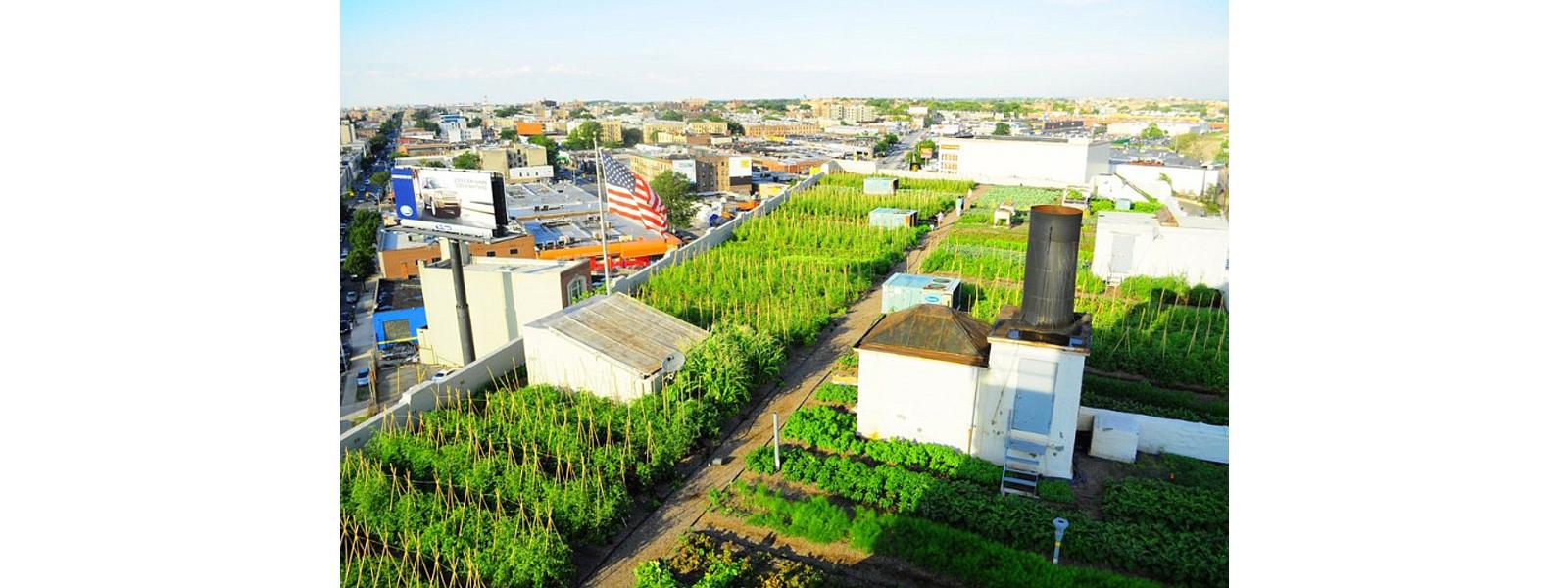 Laje técnica de edifício norte americano é transformada em uma horta urbana