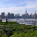 Horta urbana em telhado de nova york