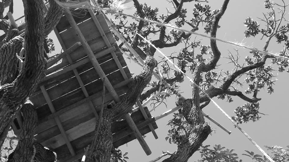 Curso capacitador, com profissionais experientes para aprender a fazer uma casa na árvore