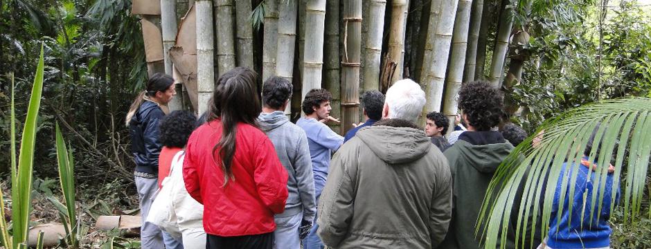 bambu-instituto-pindorama-rj