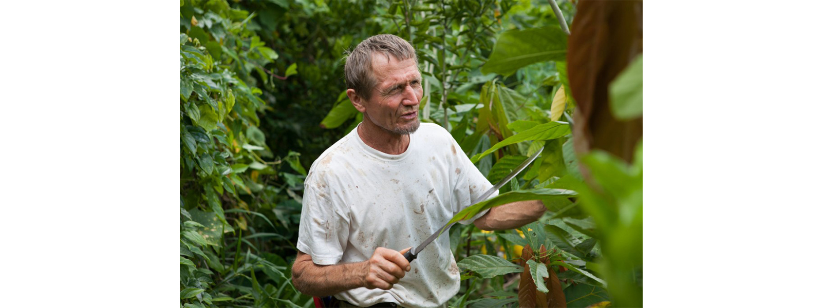 agrofloresta na bahia brasil com ernst