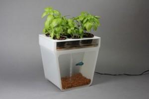 Sistema reúne cultivo de ervas e criação de peixes.