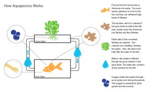 como-funciona-o-sistema-de-aquaponia