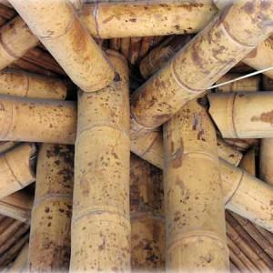 jorg-stamm-bamboo