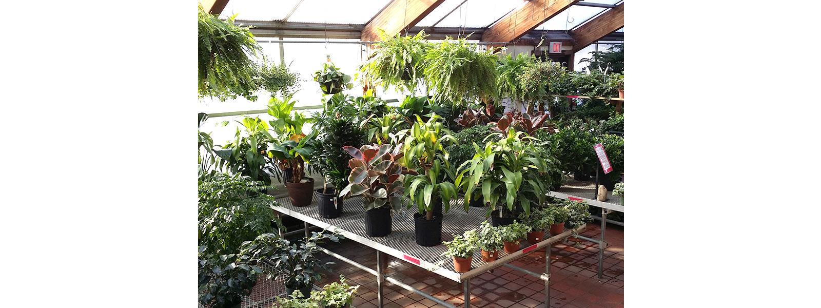 capa-plantas-purificadoras-de-ar-interno