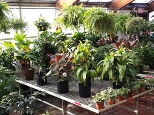 Todas as plantas, é verdade, ajudam a melhorar a qualidade do ar.