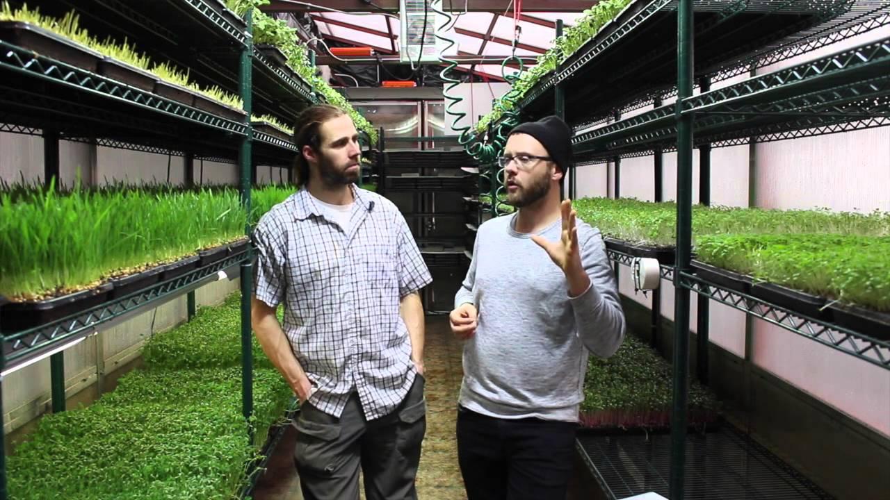 Microgreens Ecoeficientes