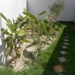 Tratamento de esgoto no jardim