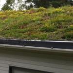 cobertura verde em telhas