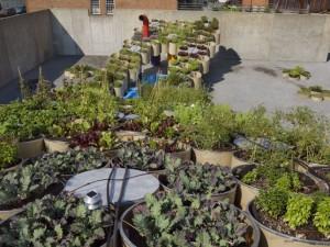 Horta Urbana Intevenção Temporária NY